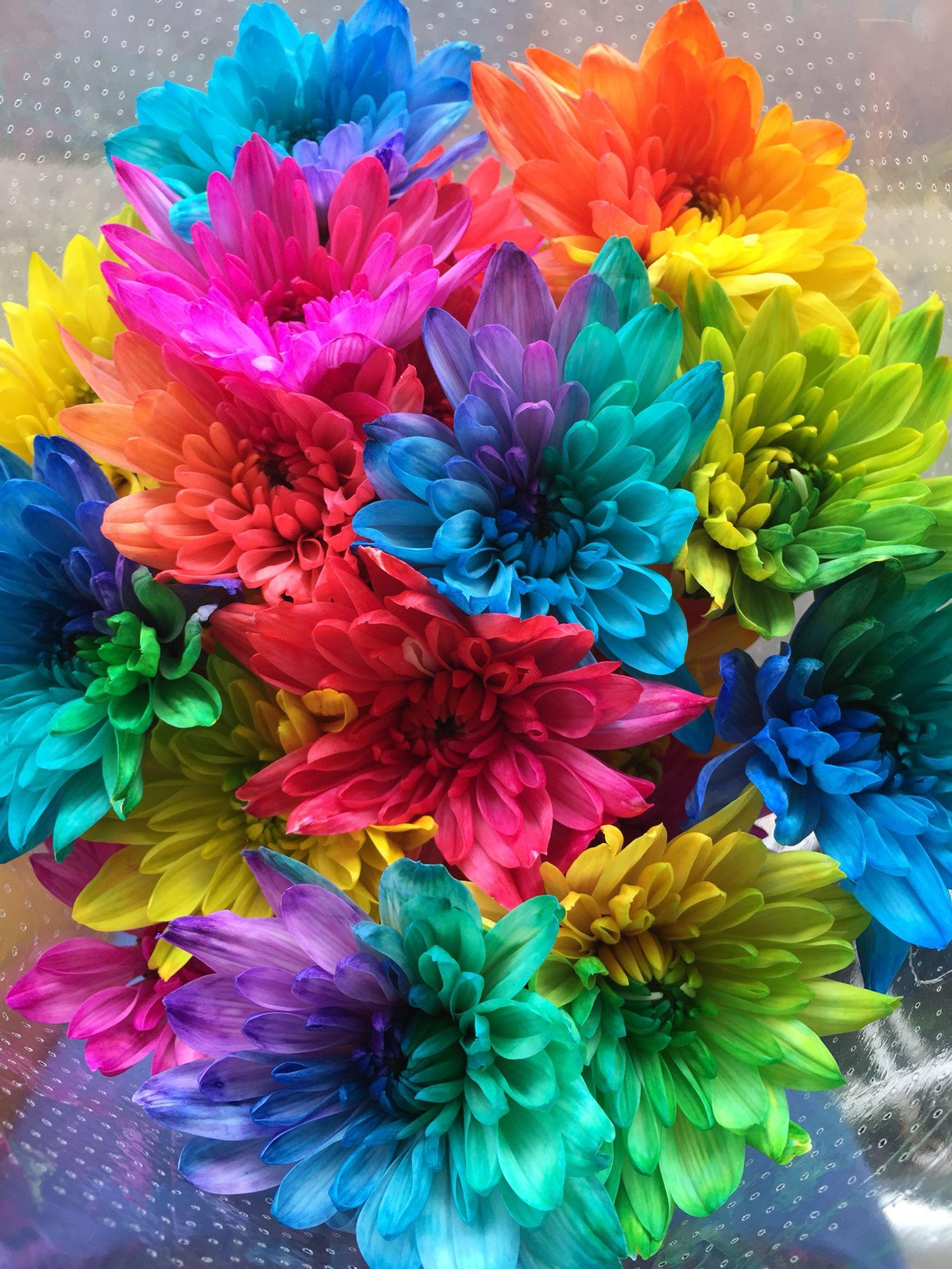 Gorgeous Multicoloured Flowers Flowers Colourful Fluro Rainbow