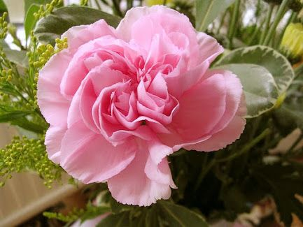 Flores ♥ Rosas - Koleksiyonlar - Google+