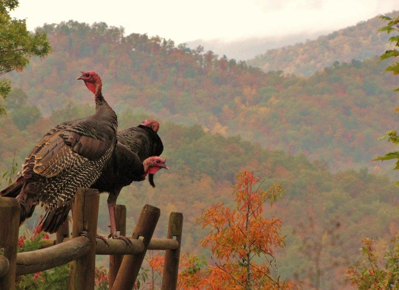 At @Hidden Creek cabins in Bryson City NC  --photo by kim michele richardson