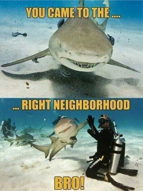 This is why I watch Shark Week. Hope to see some moron get eaten by  a shark for being stupid and swimming with them because they think they have the shark hypnotized or under control.  Then they act surprised when it doesn't work smh