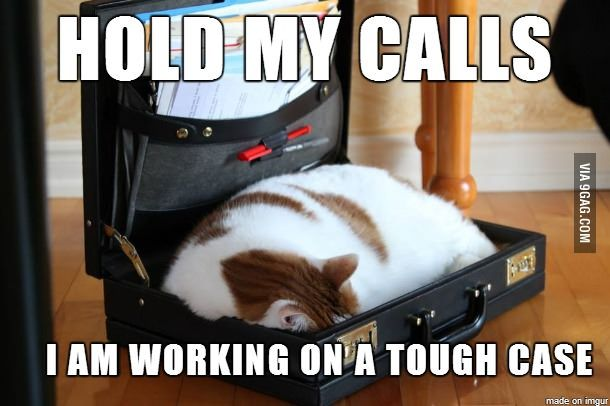 Lawyer Cat is Busy | Silly Things & Nerdy Things Too ...