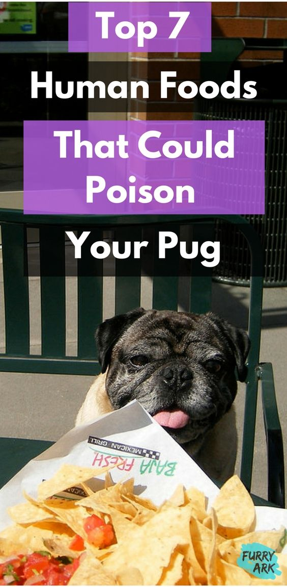 The Ultimate List Of Toxic Foods For Pugs Dog Care Tips Dog