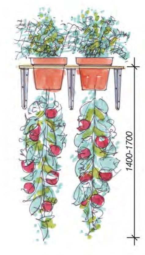 Upside Down Tomatentopf #howtogrowplants