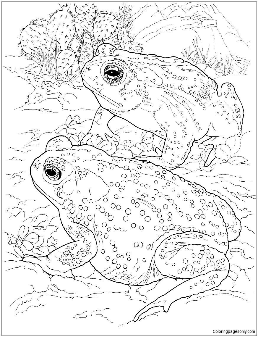 Sonoran Desert Toad Coloring Page Deserts Coloring Pages Frog