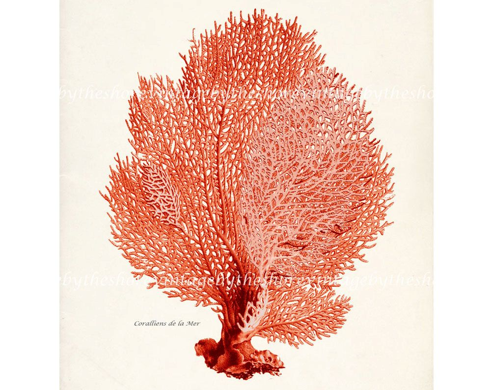 Dining roomntage sea fan natural history sea coral wall decor vintage sea fan natural history sea coral wall decor print 8x10 amipublicfo Images
