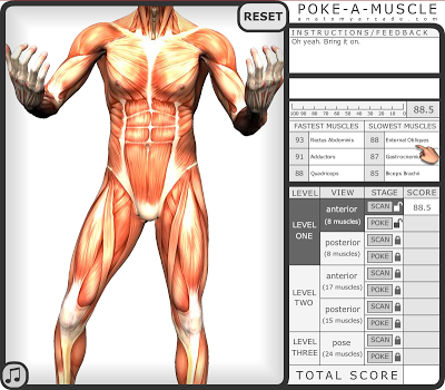 anatomy educational games- poke a muscle | high school science, Muscles