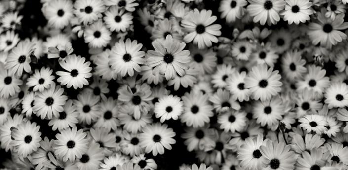 Imagenes Blanco Y Nego HD - Imagui
