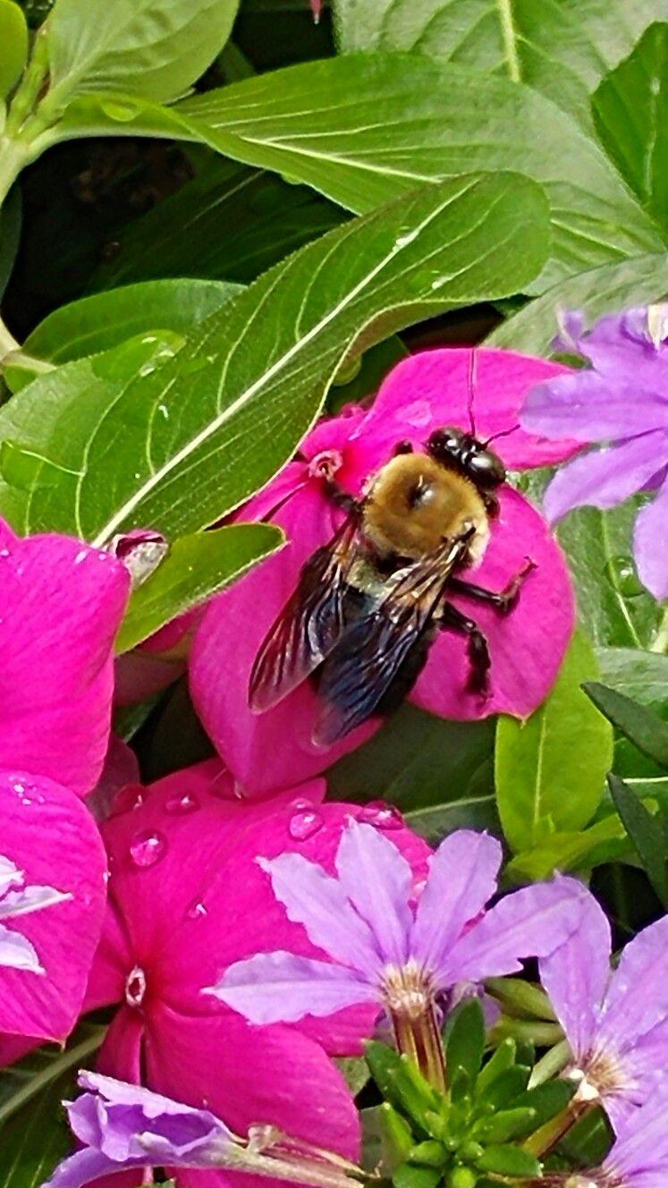 Closeup of bee on flower per Leslie Hope