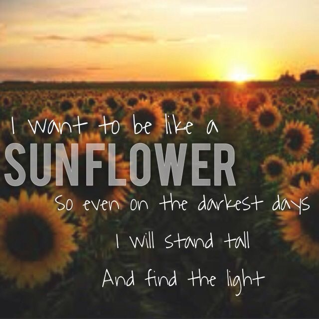 Light Stand Lyrics: I Want To Be Like A Sunflower. Quote. Light. Sunflower