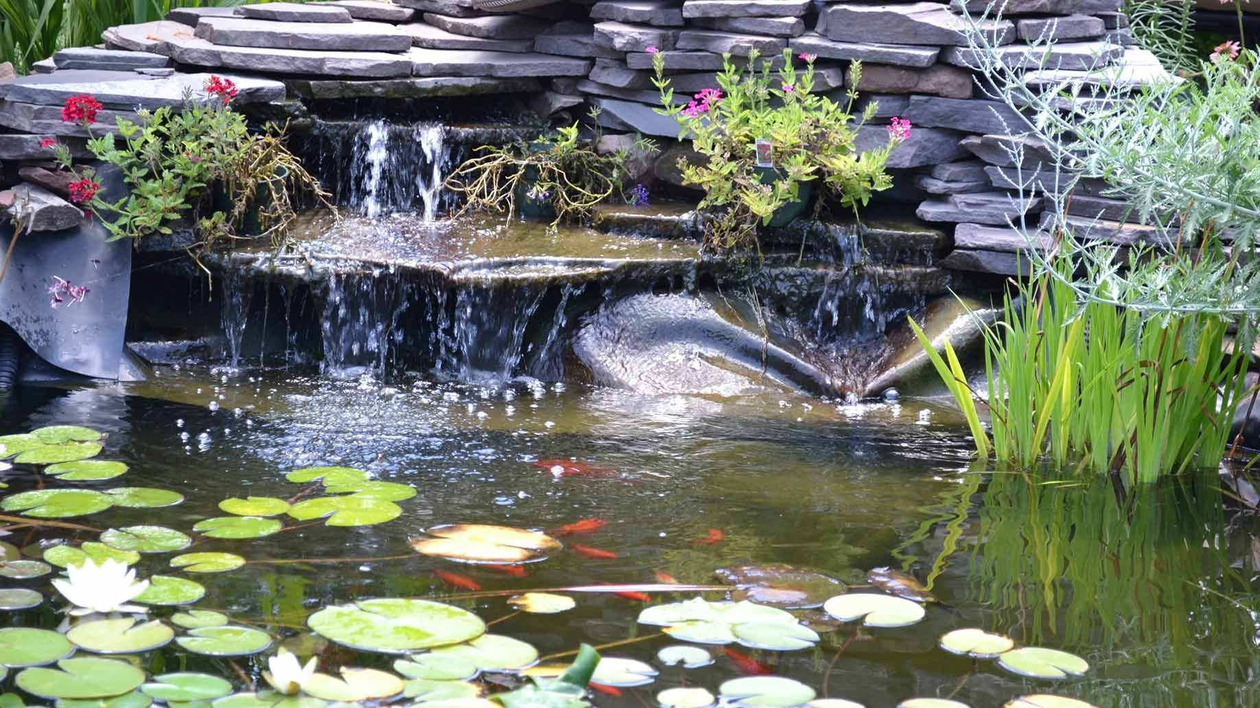 How To Build A Koi Pond Supplies Cost With Images Koi Pond Koi Pond Supplies Koi