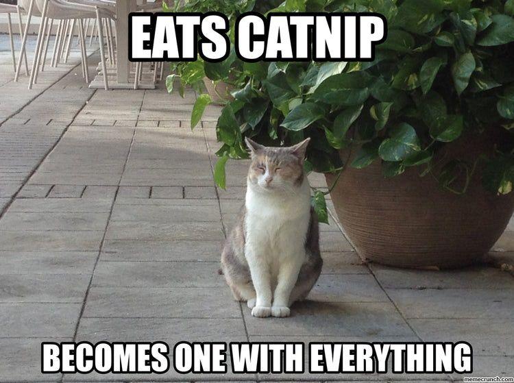 32 Zen Cats Who Could Be Spiritual Gurus Cats Cat Memes Free Cats