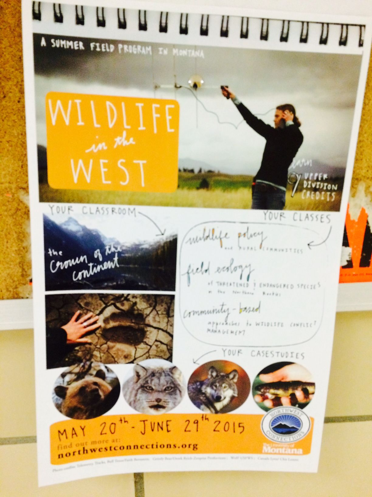 Wildlife in the West