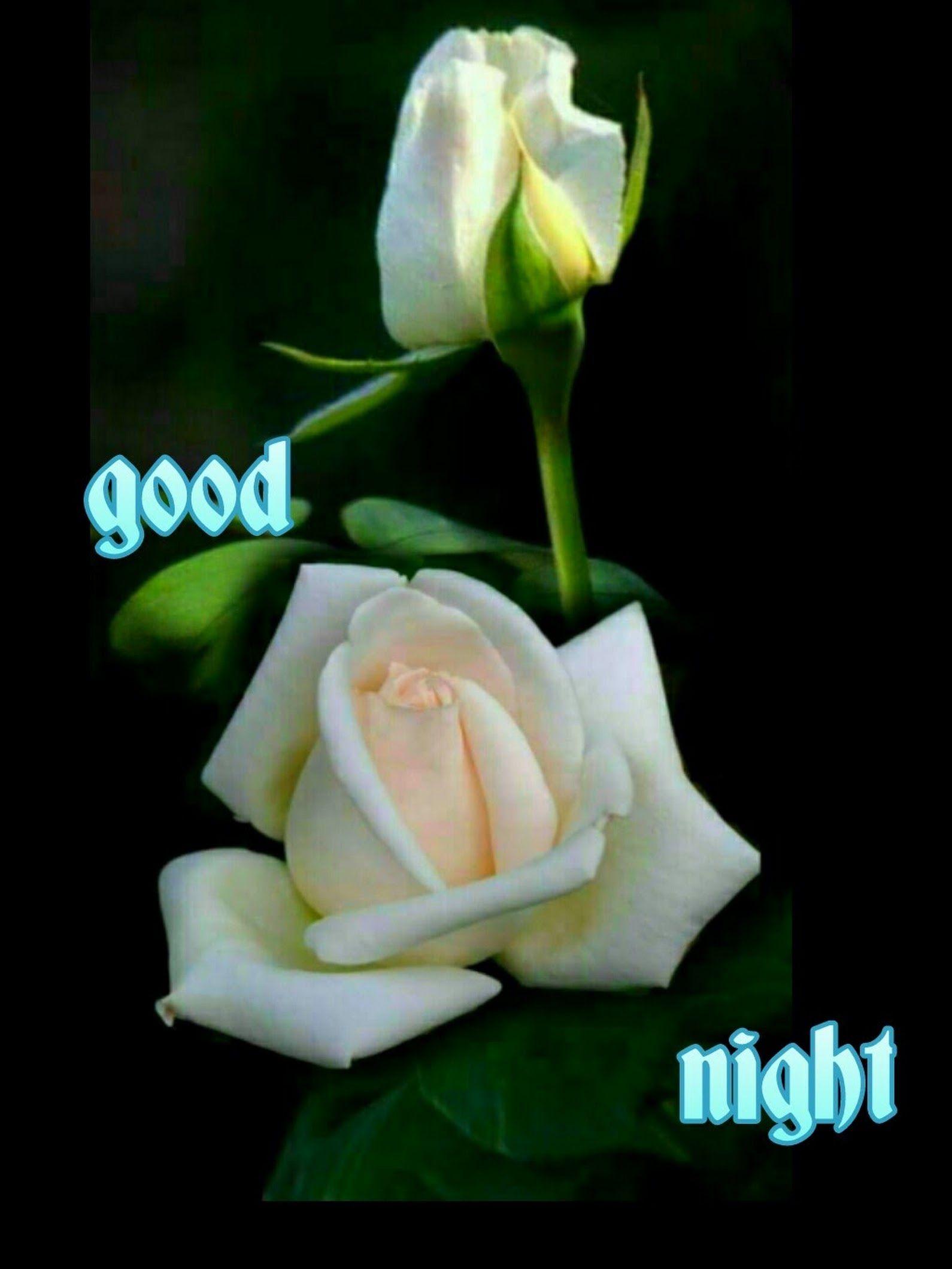 Good Night Kishor Ekatpure Google Roses Pinterest