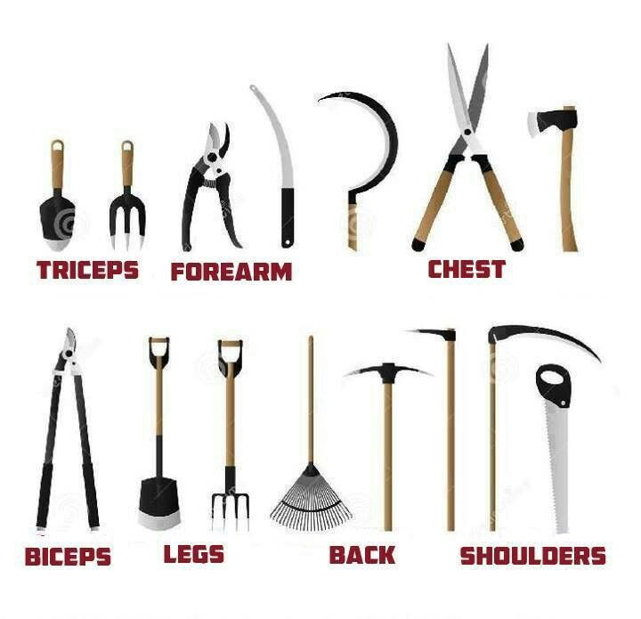 Muscles Used While Doing Yard Work Garden Tools Garden Tool