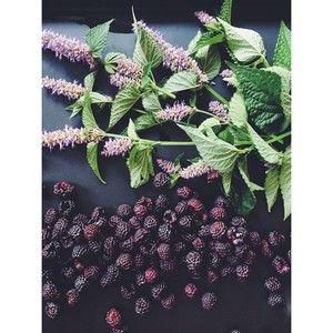 Black raspberries, hyssops, pre-ice cream prepping.