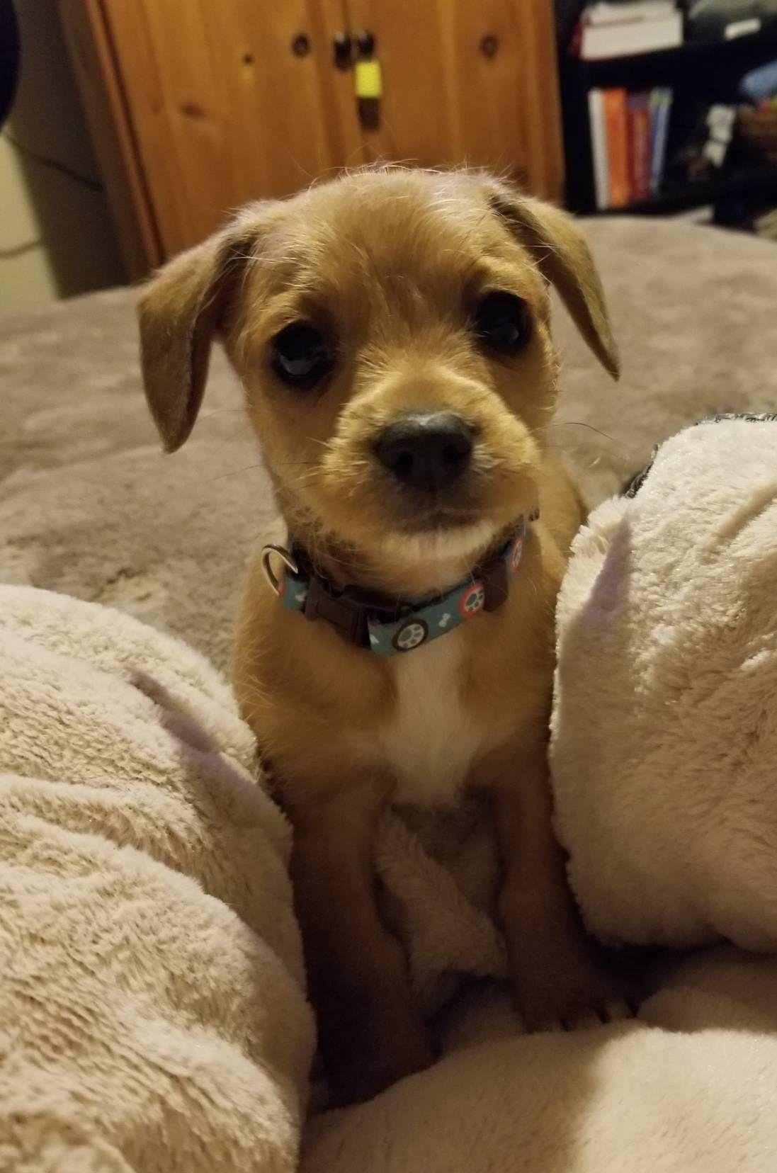 First Week With Puppy Reddit 2021