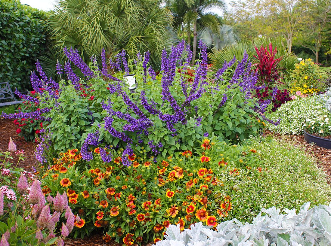 Costa farm 39 s slideshow of easy care garden ideas includes for Easy care plants for landscaping