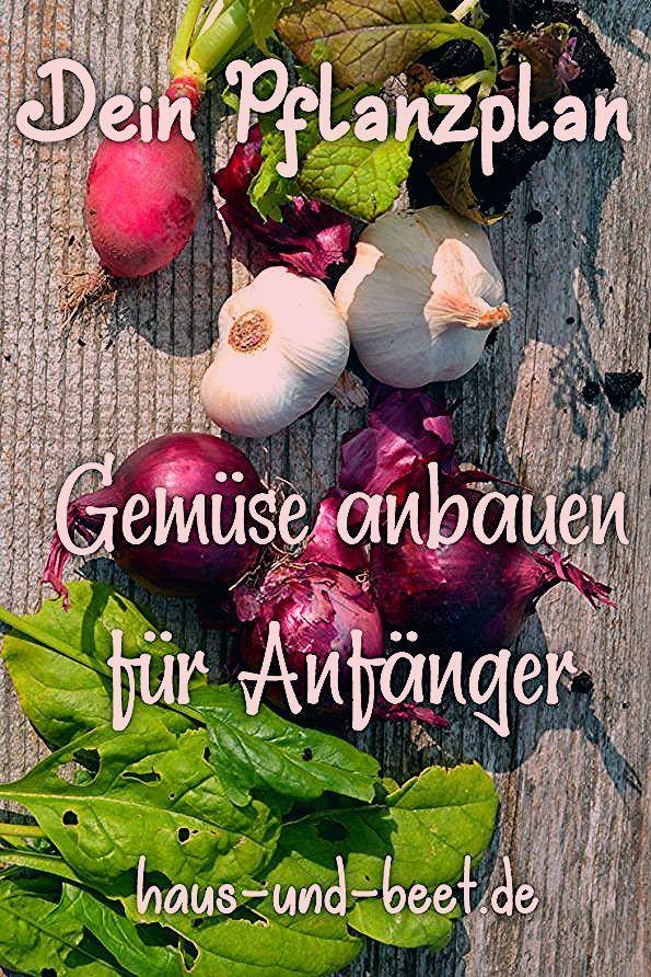 Photo of Erstelle deinen Pflanzplan für Gemüse – Mit Beispielen – Haus und Beet