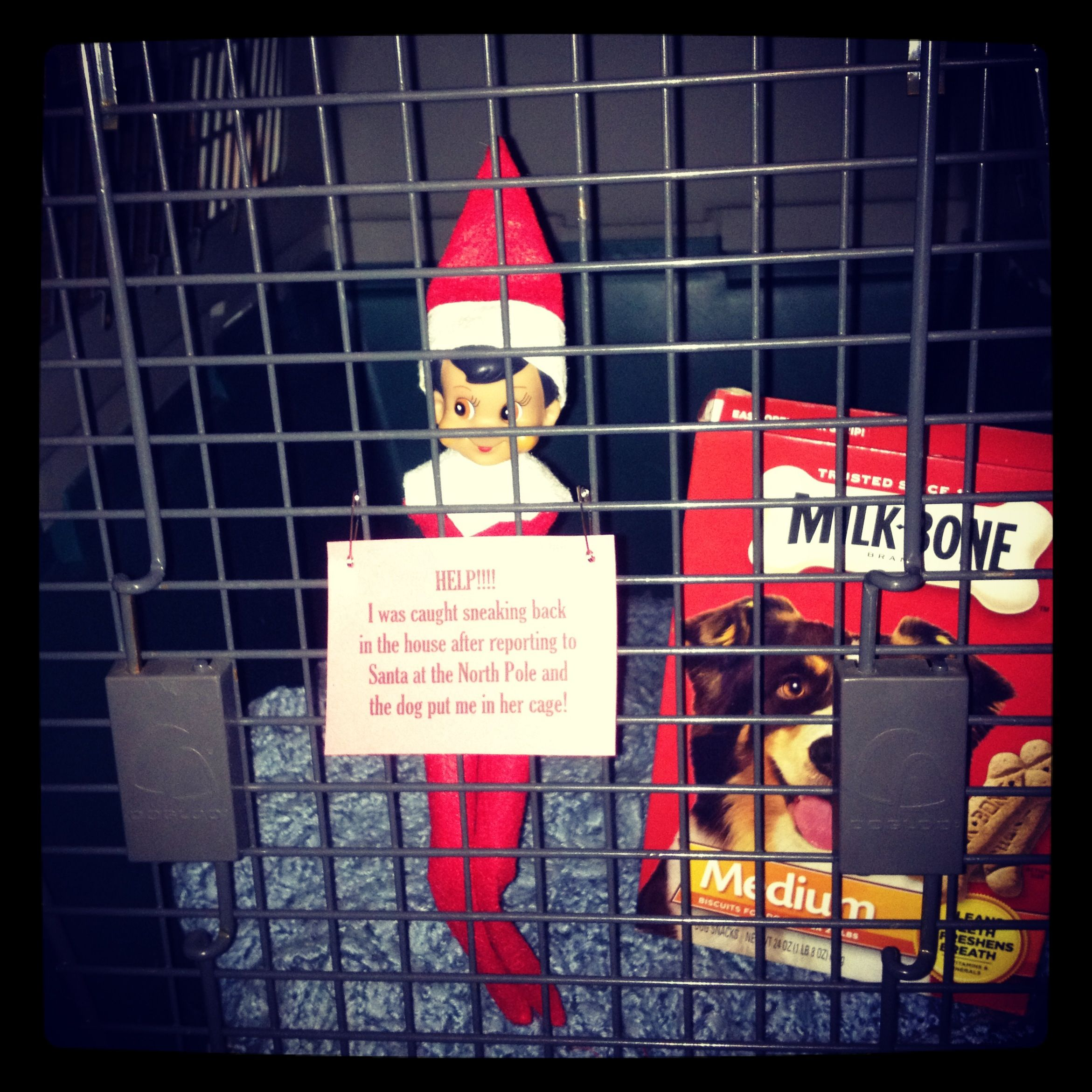 Luke Our Elf On The Shelf Was Caught Sneaking Back Into
