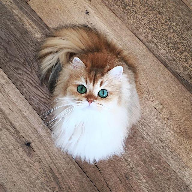 This Cat Looks Like It S Wearing Eyeliner 333 Gatinhos Fofos