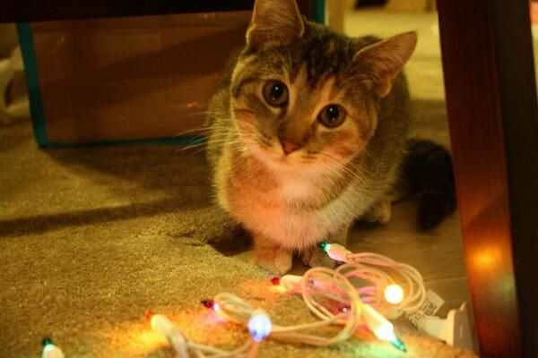 cats christmas tree lights visions of national lampoons christmas vacation