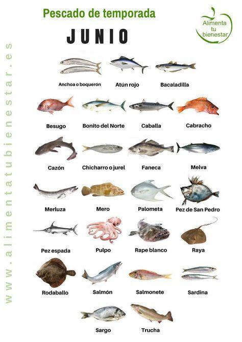 Pescado de temporada: descarga el calendario para todo el año ...
