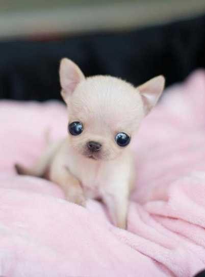 The Starchild pupppy