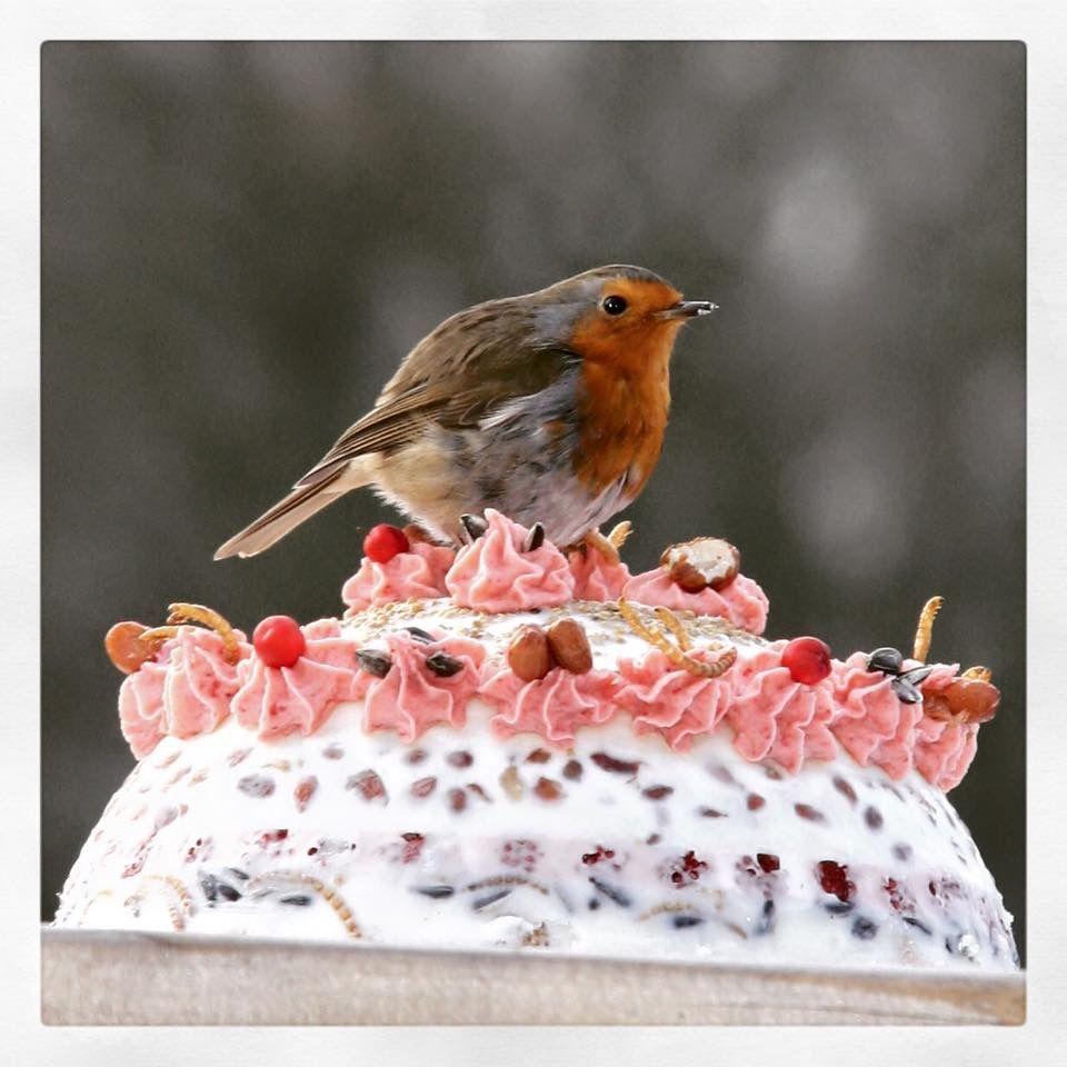 Roodborstje op zelfgemaakte vogeltaart @Wipstrikpark @Zwolle by M. Bramer
