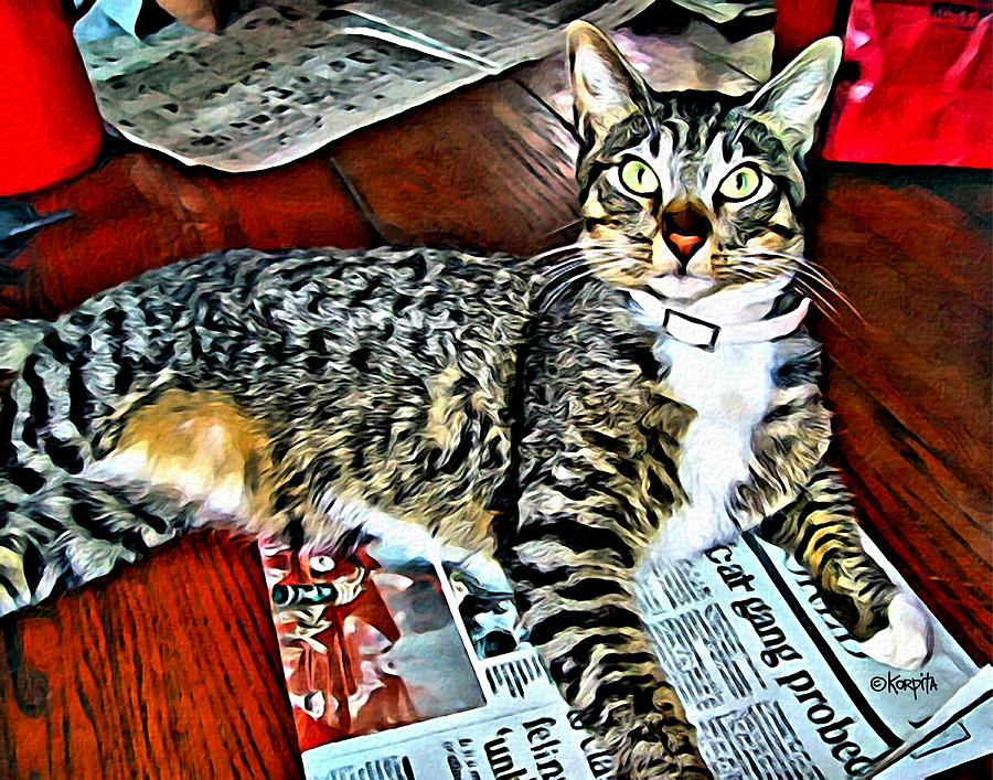 Tabby Cat On Newspaper Catching Up On The News Tabby