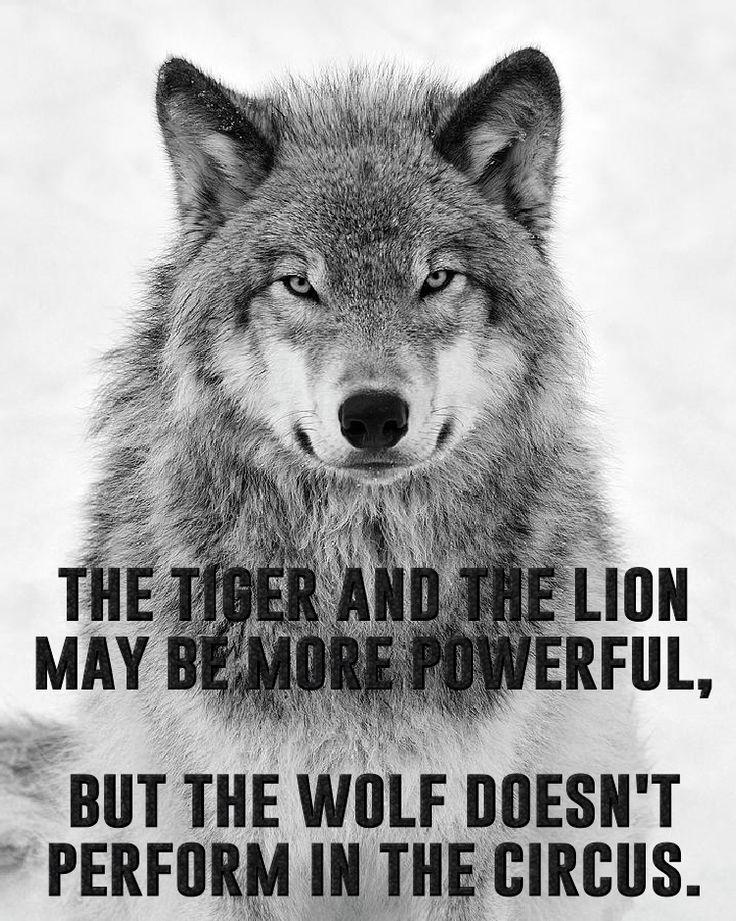 Wolf Spruch