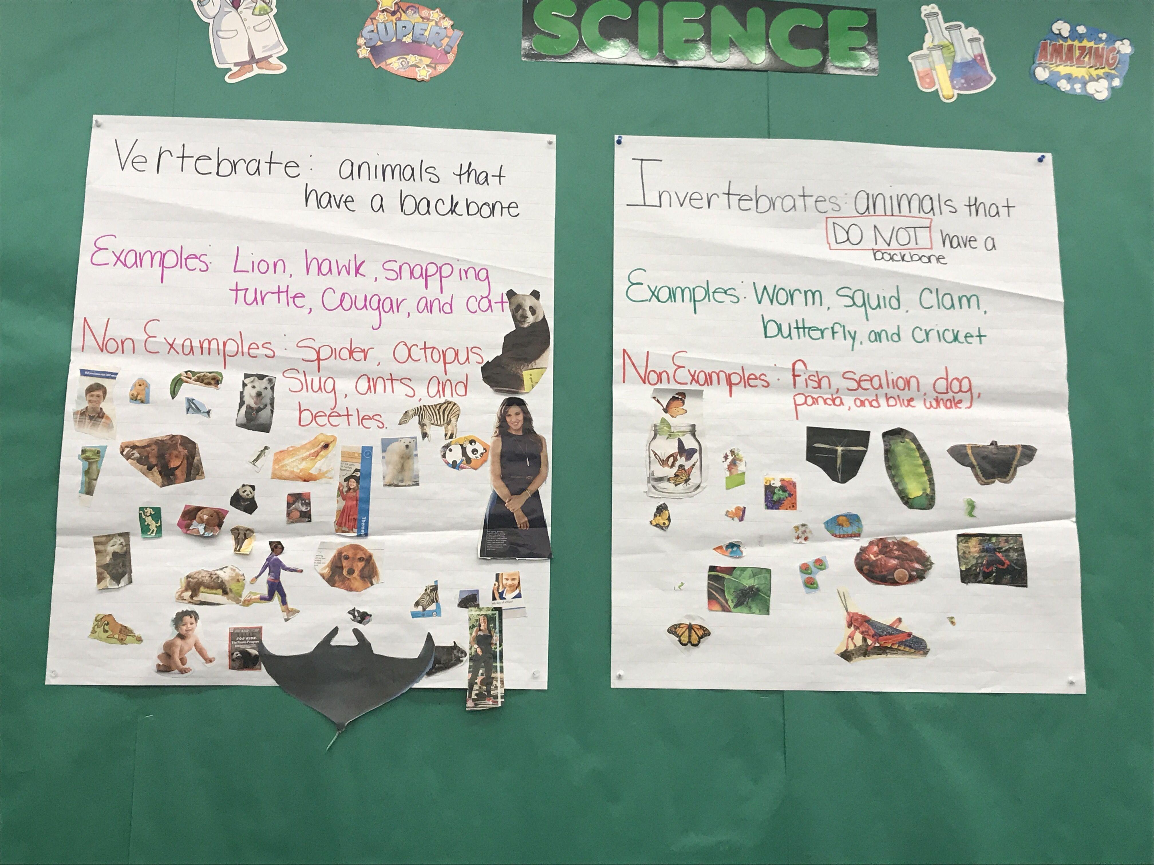 Science Vertebrate And Invertebrate Anchor Charts Little