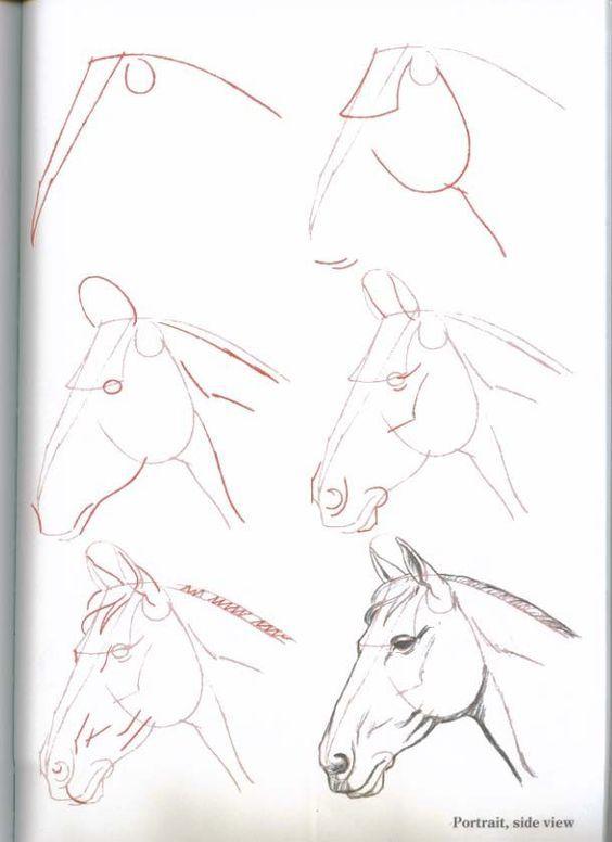 pferdekopf malen schritt fur schritt zeichnen und co pferde zeichnen zeichnen und zeichnen. Black Bedroom Furniture Sets. Home Design Ideas