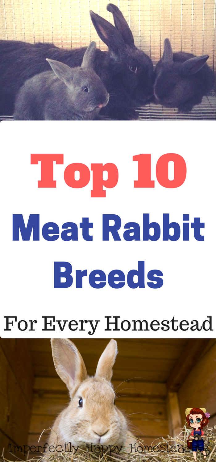 the top 10 meat rabbit breeds for every homestead a great urban