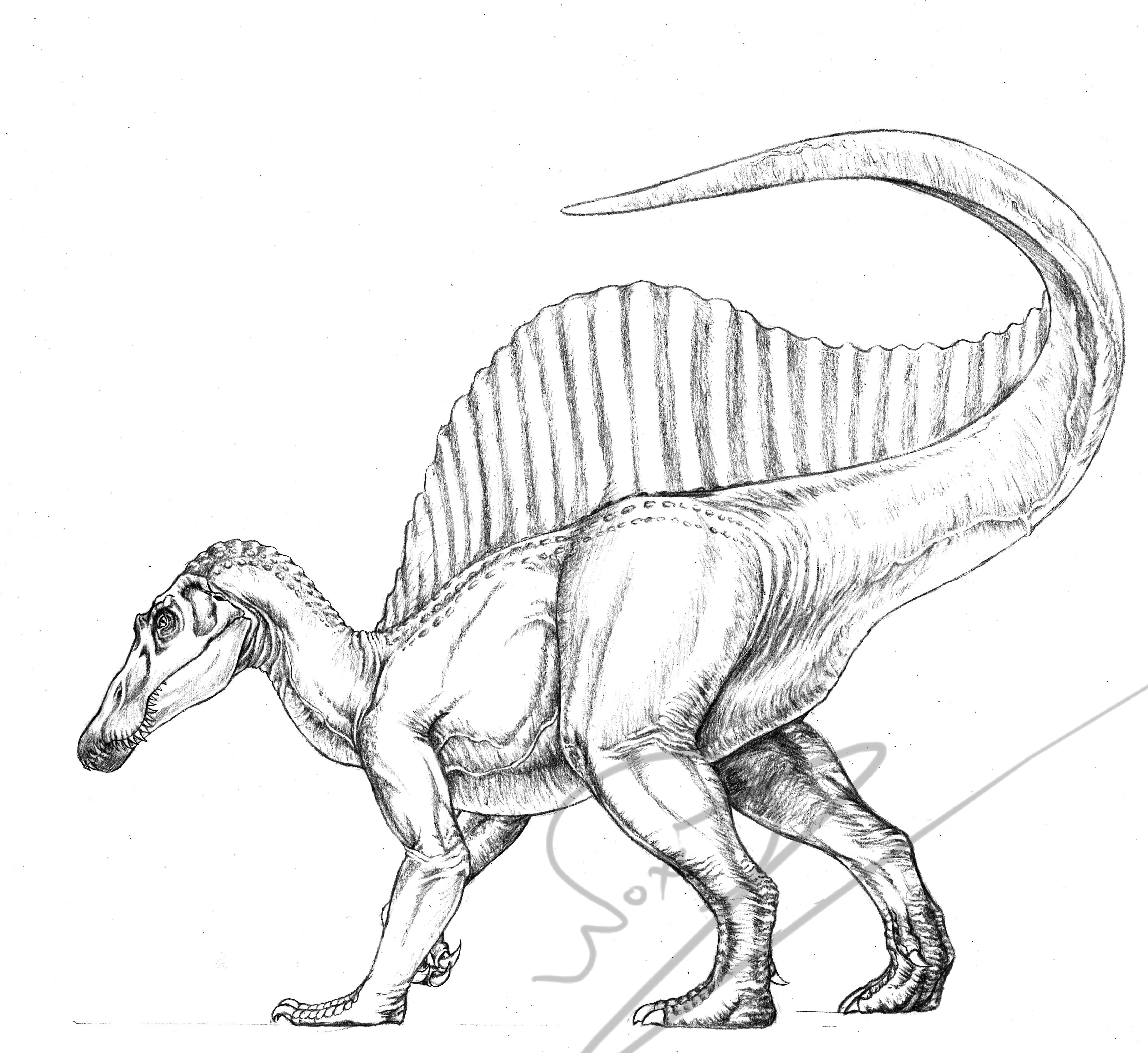 malvorlagen dinosaurier spinosaurus