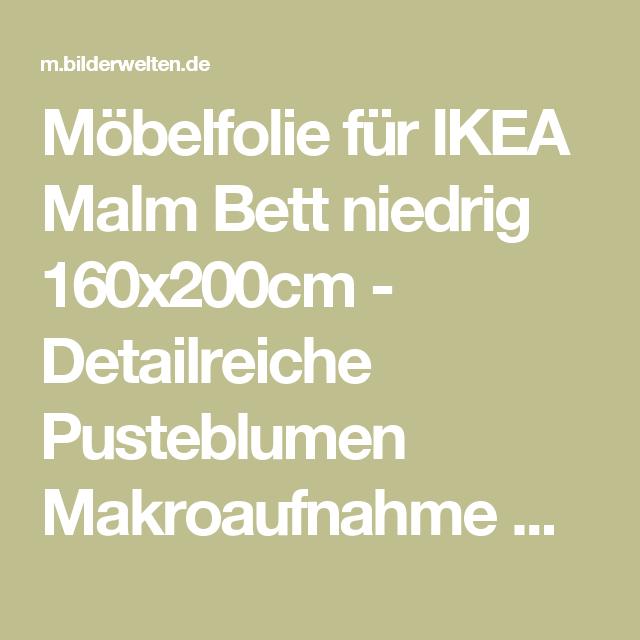 Mobelfolie Fur Ikea Malm Bett Niedrig 160x200cm Detailreiche Pusteblumen Makroaufnahme Mit Vintage Blur Effekt Ikea