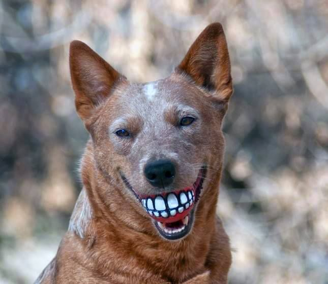 Smiling ball for dogs