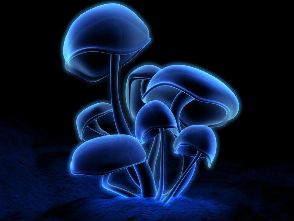 Free Wallpaper Downloads 3d Wallpaper Free Download Mushroom Wallpaper Stuffed Mushrooms Glowing Mushrooms