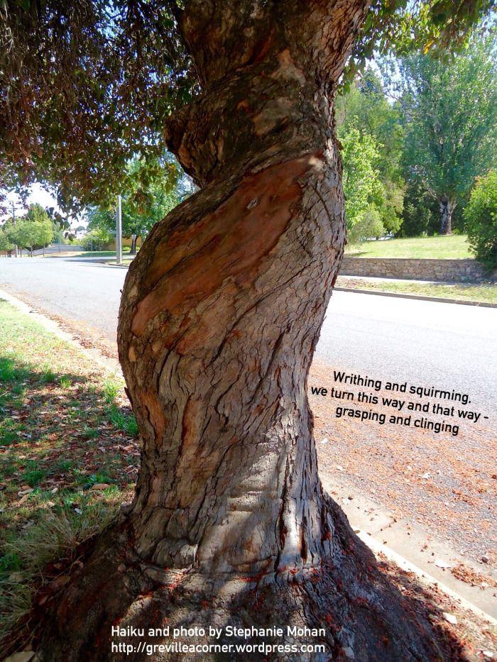 Grasping and clinging | grevilleacorner