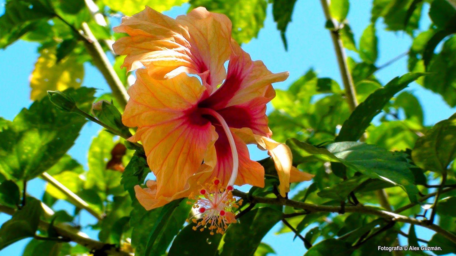 Pin On Cuban Tropics
