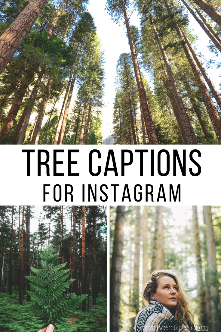 33 Tree Captions For Instagram Short Nature Quotes For Pictures In 2020 Nature Quotes Trees Instagram Captions Instagram Captions Travel