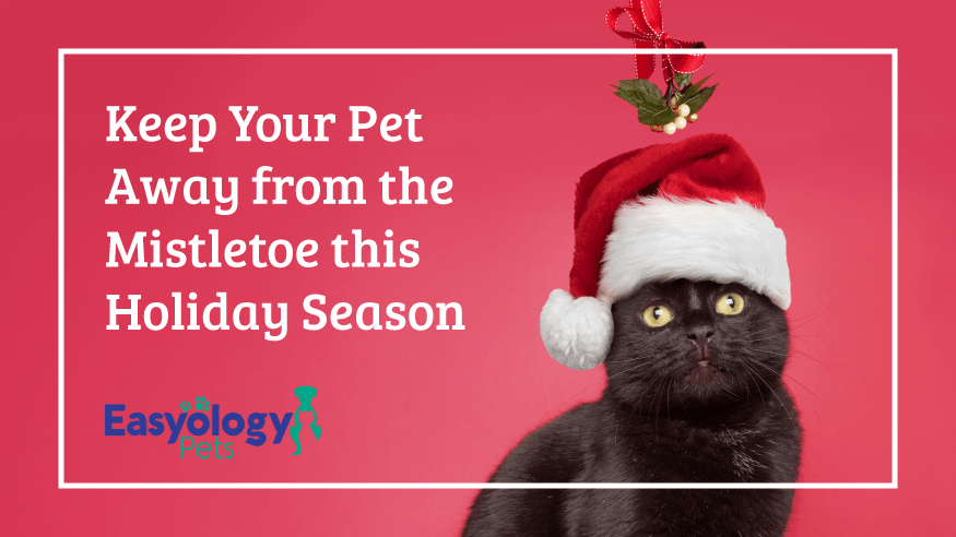 5 Holiday Plants More Toxic Than Poinsettias to Cats and