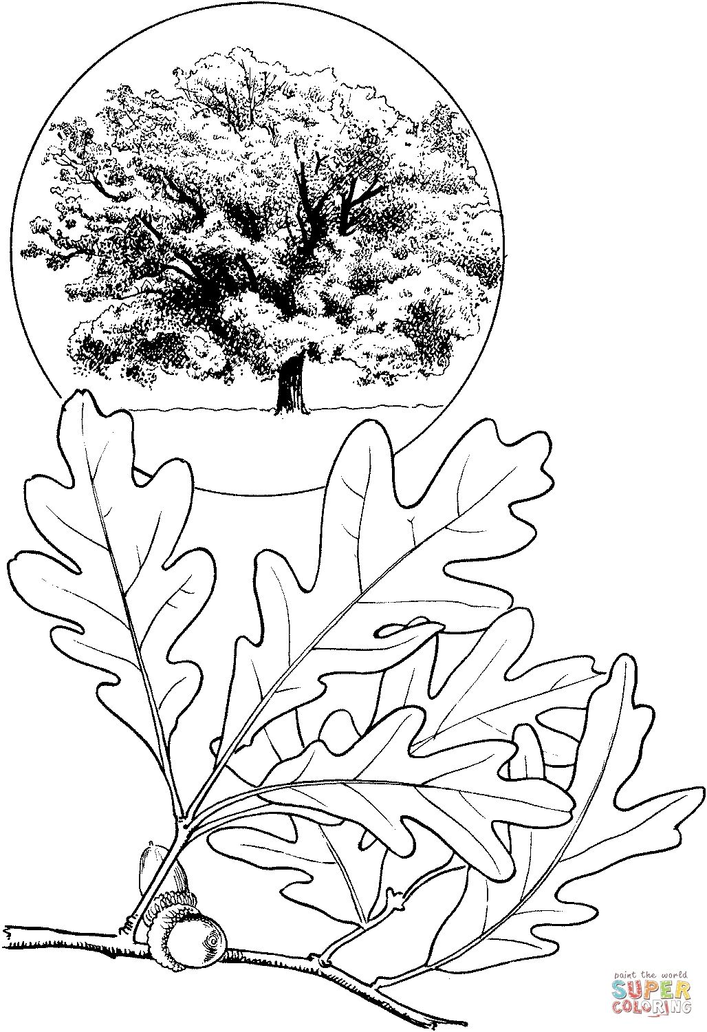 White Oak Tree Coloring Page Free