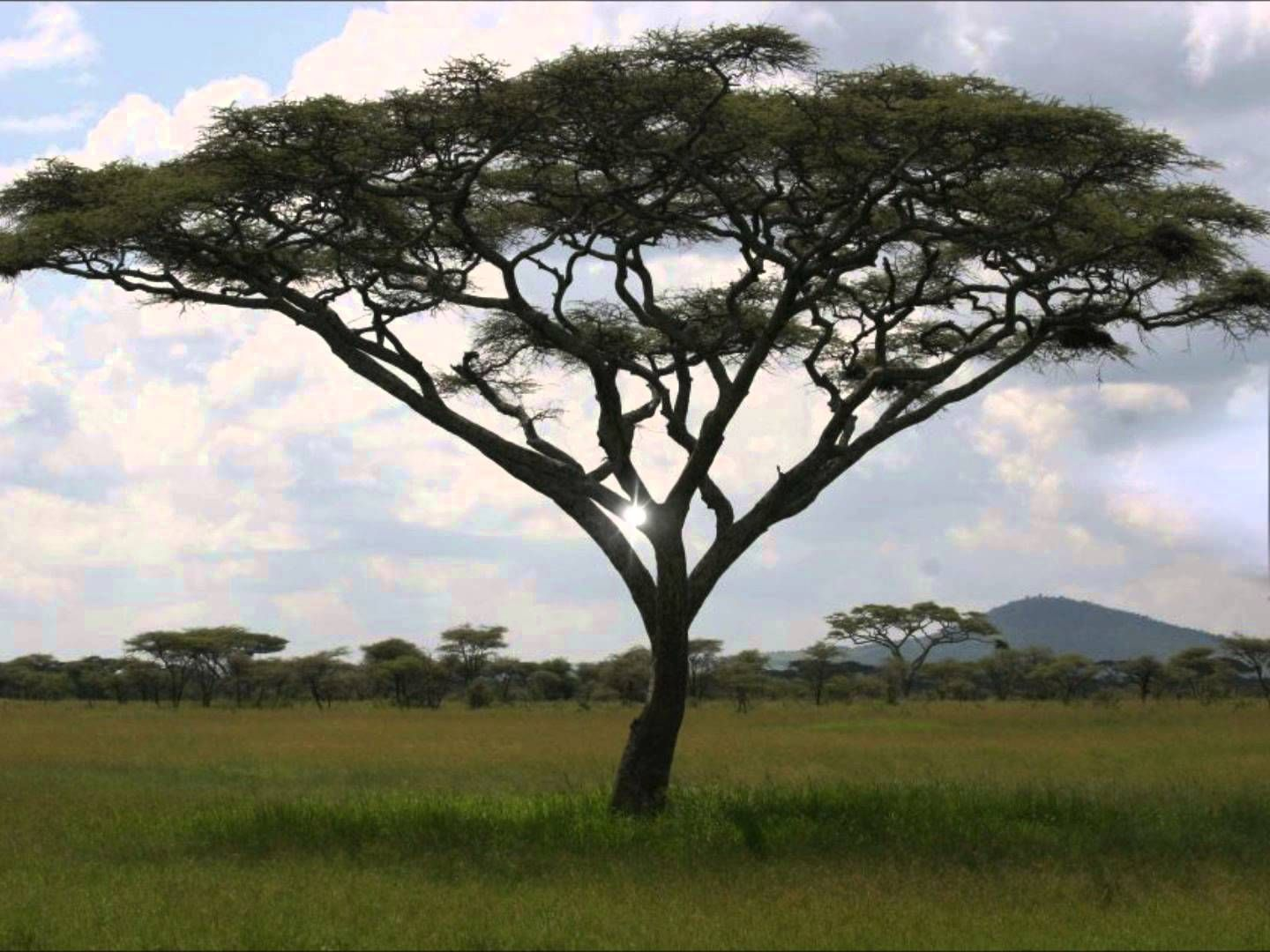 Sample Essay on Savanna Grasslands
