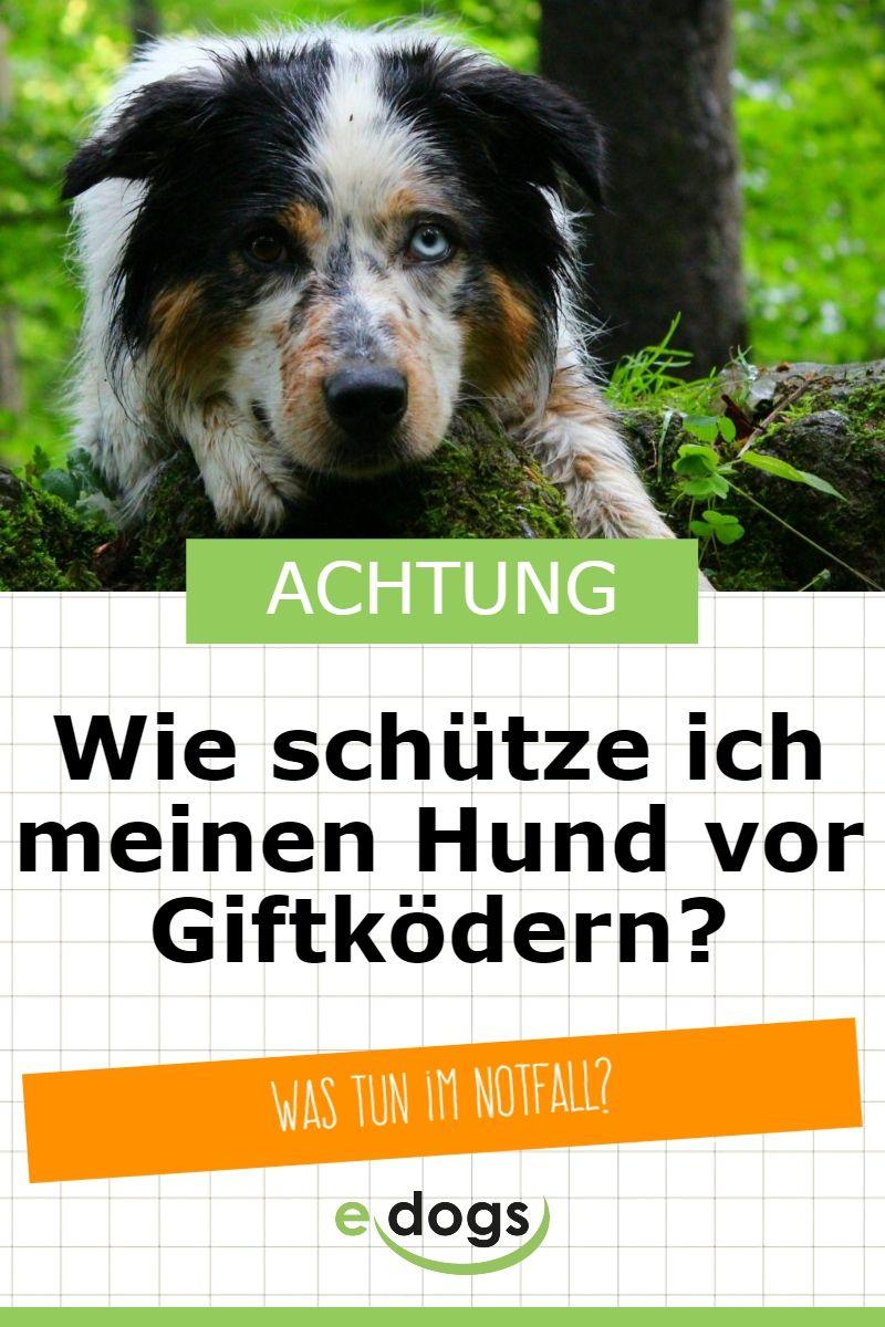 Wie Kannst Du Deinen Hund Vor Giftkodern Schutzen Hunde Hundegesundheit Tierklinik