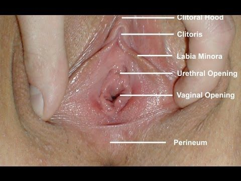 Rien^^. Picture of vulva and its part luv