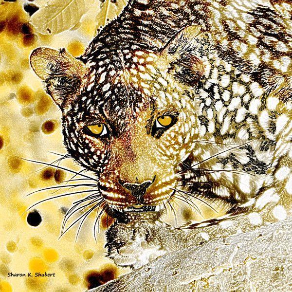 Leopard Digital Painting Art, Africa Big Cat, African Wildlife ...