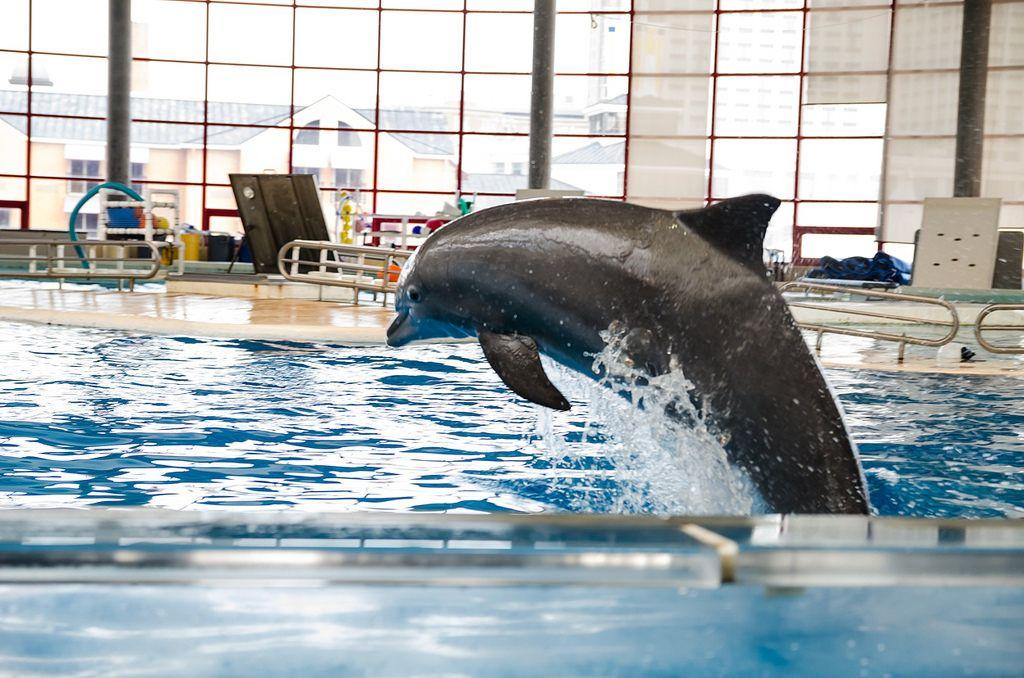 National Aquarium in Baltimore, Md   Baltimore, Aquarium