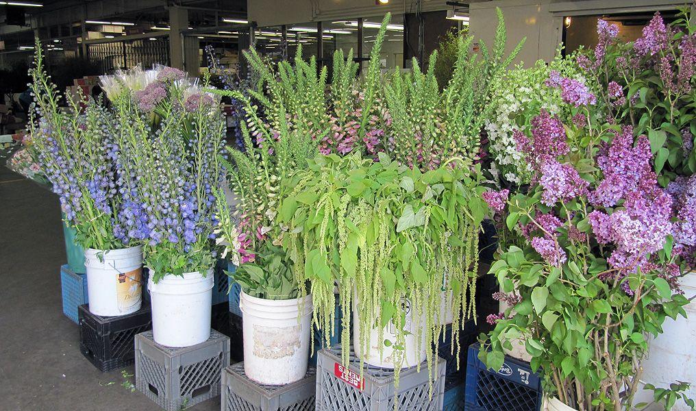 Delphinium April Flowers Plants Delphinium