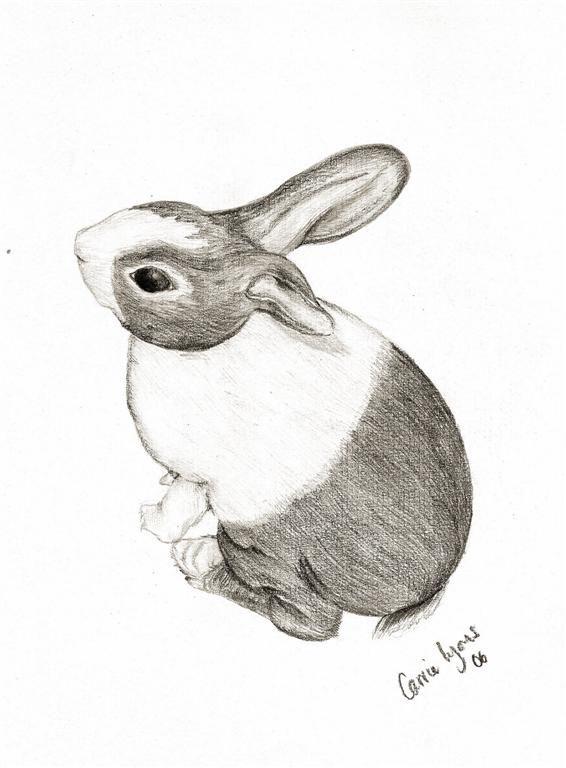 Quartz Bunny Drawing by carriephlyonsdeviantartcom on