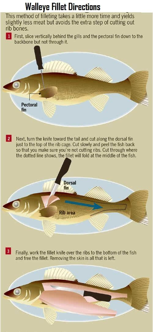 Wawang Lake Resort My Blog Dezdemon Exoticfish Top Walleye Fishing Walleye Fishing Tips Fishing Tips